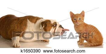 Arquivo de Fotografias - cão, gato, luta.  fotosearch - busca  de fotos, imagens  e clipart